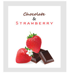 chocolate and strawberry vector image