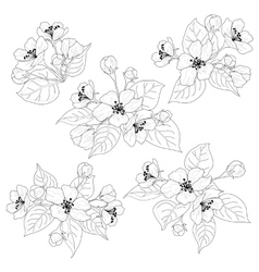 Apple tree flowers and leaves set contours vector