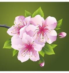 Blossoming branch of japanese tree sakura vector image