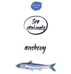 Fresh anchovy watercolor vector