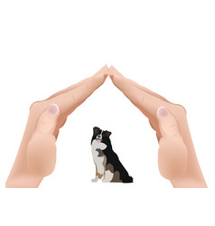 Hands in shape a roover a dog in vector