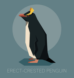 flat erect-crested penguin vector image