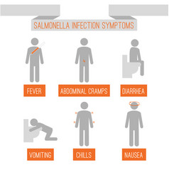 salmonella infection symptoms vector image
