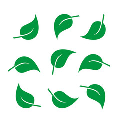 leaves icon set and vector image
