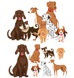 Many types of dogs vector