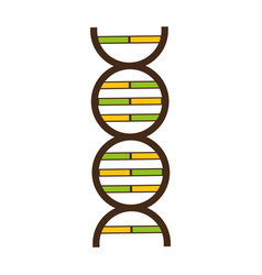 science genetic dna vector image