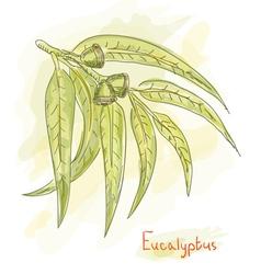 eucalyptus branch watercolor vector image vector image