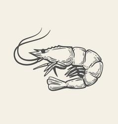 prawn or shrimp vector image vector image