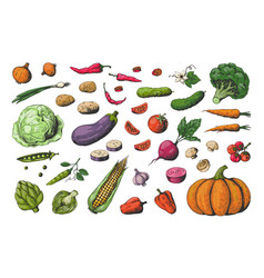 hand drawn colored vegetables food sketch vector image