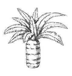 pineapple palm tropical tree monochrome vector image