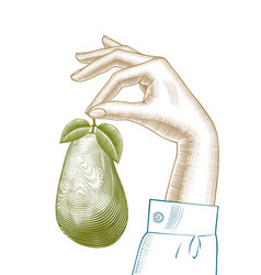 a hand holding a ripe avocado vector image