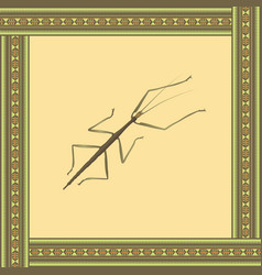 Bug stick color in african ornament f vector