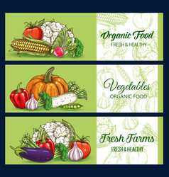 farm food vegetables green sketch banners vector image