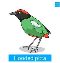 Hooded pitta learn birds educational game vector