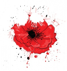 Painted poppy vector
