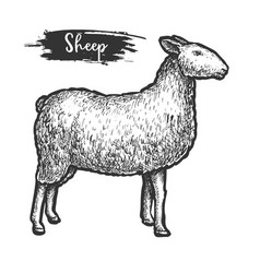 sketch or woodcut sheep animal isolated lamb vector image