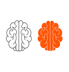 human brain on white vector image vector image