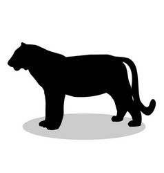 tiger wildcat black silhouette animal vector image