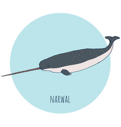 Narwal whale vector