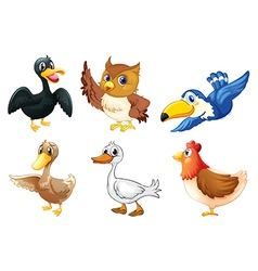 A group of birds vector image vector image