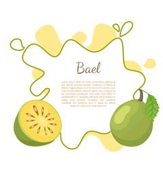 bael exotic juicy fruit aegle poster vector image