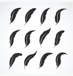 group of feather on white background icon vector image