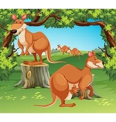 Kangaroos in field vector
