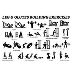 legs and glutes building exercise and muscle vector image