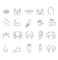 Line human male and female body parts set vector