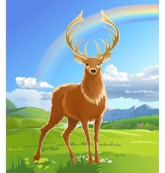 Majestic adult red deer in the meadow vector