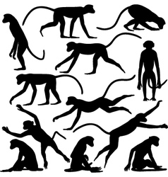 Monkey poses vector image