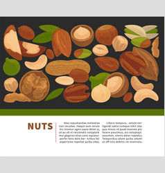 nuts organic nutrition and raw diet information vector image