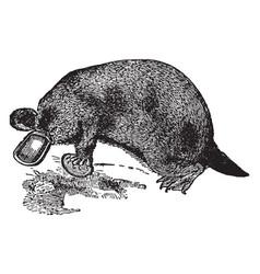 Platypus vintage vector