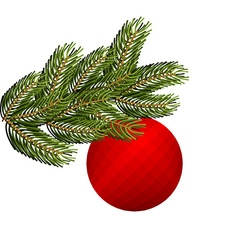 Spruce branch and Christmas tree toy Red holiday vector
