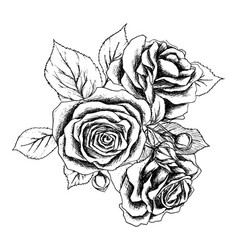 beautiful monochrome black and white bouquet rose vector image