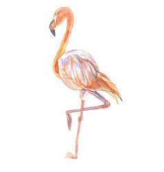 bird-pink flamingo vector image