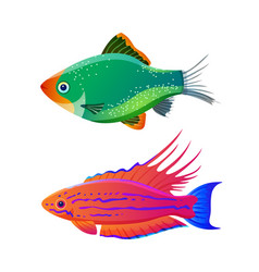 Filamented flasher wrasse and green tiger barb vector