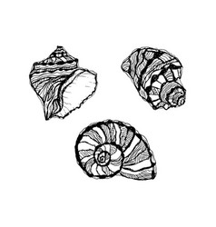 Seashell set hand drawn of sketch mollusk shell vector