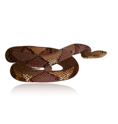 snake3 vector image