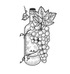 wine bottle and grapes sketch vector image