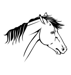 horse profile portrait vector image vector image