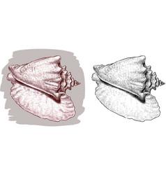 Big seashell vector