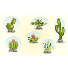 Collection of cacti and desert plants vector
