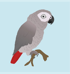 cute african grey parrot vector image