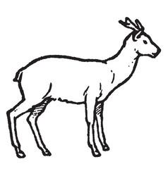 Early horned deer vintage vector