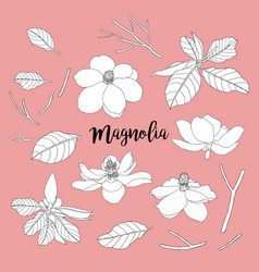 magnolia set flowers and leaves floral vector image