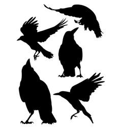 rook crow raven birds silhouette vector image