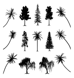 Trees with roots and palms vector image