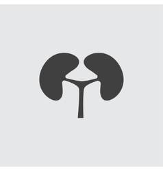 Kidney icon vector image