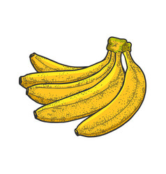 banana fruit sketch vector image